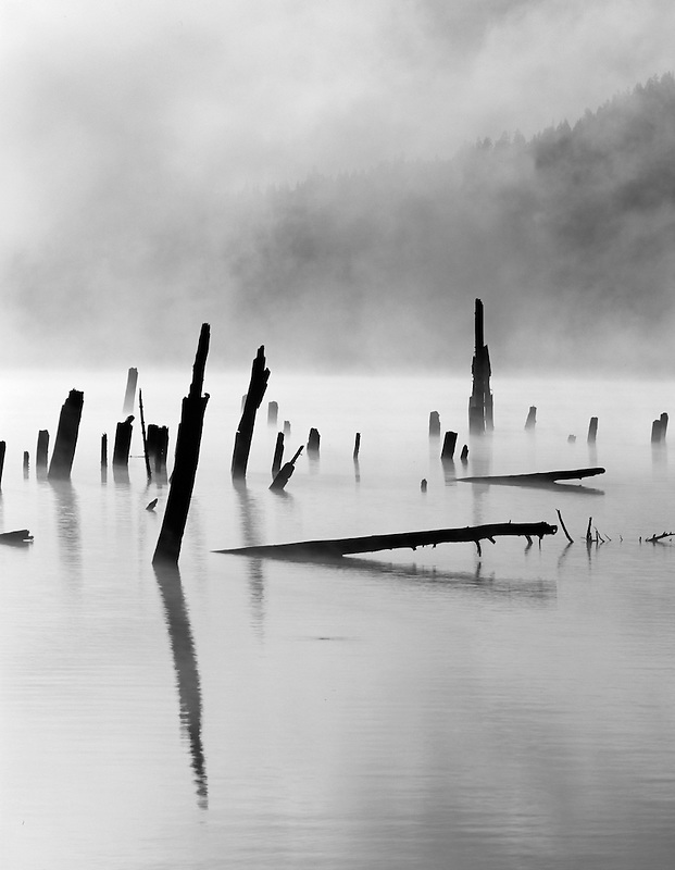 Dead trees and fog at Craine Prairie Reservoir. Oregon.