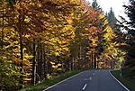 DEU, Deutschland, Bayern, Niederbayern, Naturpark Bayerischer Wald, Herbstlandschaft, Landstrasse | DEU, Germany, Bavaria, Lower-Bavaria, Nature Park Bavarian Forest, autumn landscape, rural road