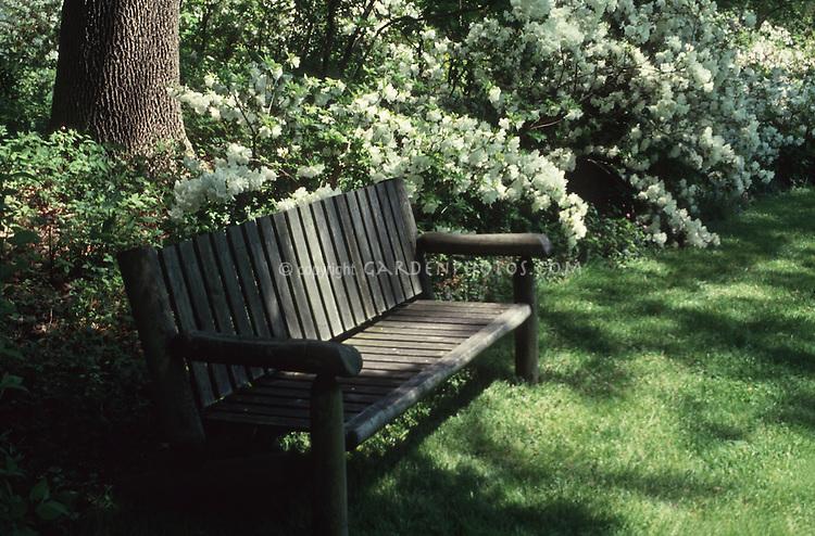 Wooden garden bench in shade against azaleas in spring