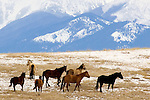 herd of horses frisky in field with snow mountains in background in bozeman montana
