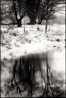 Reflection of trees in lake<br />