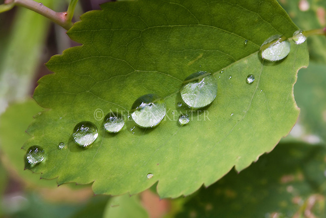 Water droplets on the surface of a leaf