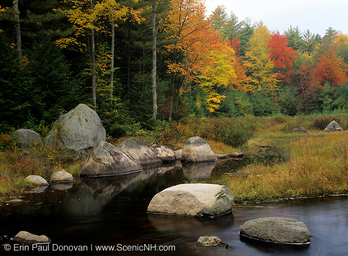 Fall colors around a wetlands area in the state of New Hampshire USA