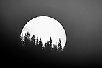 USA, Wyoming, Yellowstone National Park, black-and-white sunset over lodgepole pines