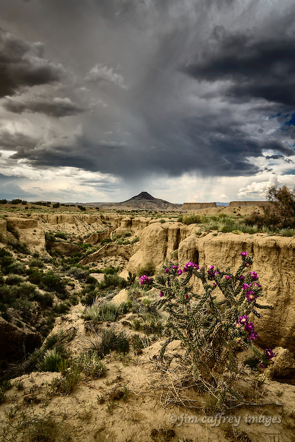 A lone Chaifruit Cholls stands at the head of a deep arroyo with Cerro Cuate in the distance in New Mexico's Rio Puerco Valley