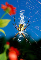 Spiders and bugs: Artistry and competency