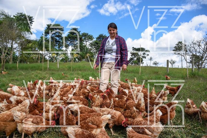 ARMENIA - COLOMBIA, 24-05-2021: Jenny Gallego es una avicultora quindiana del municipio de Circasia, tiene alrededor de 200 gallinas en su finca El Bosque. A más de un mes del inicio del Paro Nacional, los campesinos han tenido que reinventar la forma para mantener sus cultivos y criaderos activos para minimizar las pérdidas por los bloqueos que aún se mantienen en las vías. Según cifras del Ministerio de Hacienda, las pérdidas diarias están en un monto de $480.000 millones de pesos colombianos, lo cual sumando la totalidad de los días del Paro Nacional, dan un total de $10,8 billones de pesos colombianos. / Jenny Gallego is a poultry farmer from the municipality of Circasia in the province of Quindio. She has around 200 hens on her farm El Bosque. More than a month after the beginning of the National Strike, farmers have had to reinvent the way to keep their crops and hatcheries active in order to minimize losses due to the roadblocks that are still in place. According to figures from the Ministry of Finance, the daily losses are in the amount of $480,000 million Colombian pesos, which adding all the days of the National Strike, add up to a total of $10.8 billion Colombian pesos. Photo: VizzorImage / Santiago Castro / Cont