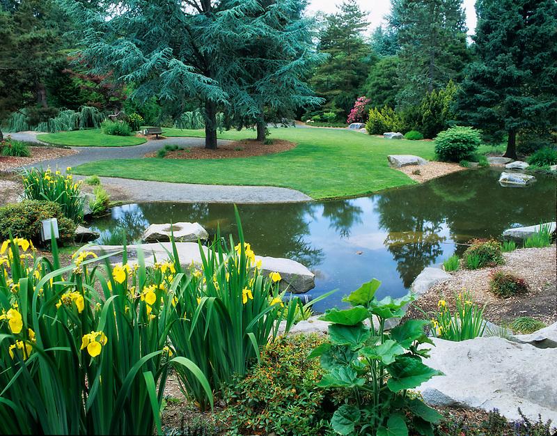 Iris and pond at Kubota Gardens, Seattle, Washington