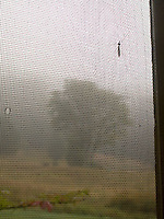 Insect on torn window screen with out of focus single tree in background<br />