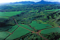 Aerial view of sugar cane fields near Lihue Airport