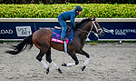 January 23, 2020: True Timber gallops on the main track as horses prepare for the Pegasus World Cup Invitational at Gulfstream Park Race Track in Hallandale Beach, Florida. John Voorhees/Eclipse Sportswire/CSM