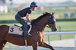 MEYDAN,DUBAI-MARCH 25: Rich Tapestry,trained by Michael Chang,exercises in preparation for the at Meydan Racecourse on March 25,2016 in Meydan,Dubai (Photo by Kaz Ishida)