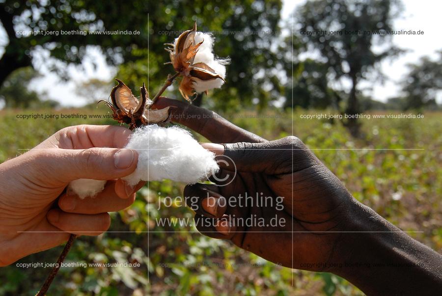 MALI , Bougouni, organic and fair trade cotton project, black and white hand holding cotton / Projekt oekologischer Anbau und Fairtrade Baumwolle, Europaeer und Afrikaner halten Baumwolle