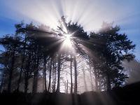 Sunburst through trees at Devils Punchbowl State Natural Area, Oregon, Oregon