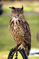 Pictured: An owl Saturday 13 August 2016<br />