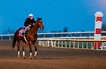 November 1, 2020: Frank's Rockette, trained by trainer William I. Mott, exercises in preparation for the Breeders' Cup Sprint at Keeneland Racetrack in Lexington, Kentucky on November 1, 2020. Scott Serio/Eclipse Sportswire/Breeders Cup /CSM