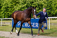 AUS-Sam Griffiths presents Annaghmore Valoner during the First Horse Inspection for the CCI-L2* Section D.  2019 GBR-Saracen Horse Feeds Houghton International Horse Trial. Wednesday 22 May. Copyright Photo: Libby Law Photography