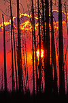 Sun sets behind Larch Trees killed by forest fire, and smoke from an on-going fire, summer of 2006.  Near Hat Point on Monument Ridge above Hells Canyon.