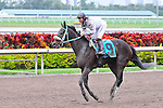 31 January 2010: Kip the Tiger with jockey Luis Saez in the eight race at Gulfstream Park in Hallandale Beach, Florida.