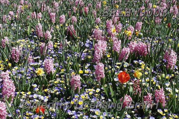 Luiz, FLOWERS, BLUMEN, FLORES, photos+++++,BRLH9003,#f#, EVERYDAY ,allover