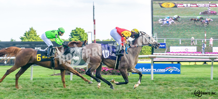 Dance With Me BW winning The Delaware Park Arabian Turf Classic at Delaware Park on 8/17/19