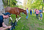 Animal Kingdom, winner of the 137th Kentucky Derby, arrives at his new home in the Team Valor Barn at the Fair Hill Training Center on May 10, 2011 in Fair Hill, Maryland.