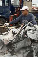 Bali Harbor Shark Fins been unloaded