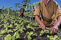 Pequeno produtor de hortaliças em Vitória do Mearim. Maranhão. 2008. Foto de Rogério Reis.