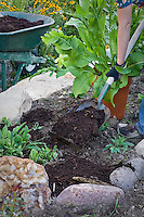 Spreading fresh compost on organic herb garden