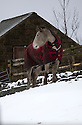 03/02/16 <br /> <br /> A horse keeps warm in his winter blanket in the village of Flash, in the Staffordshire Peak District.<br /> <br /> All Rights Reserved: F Stop Press Ltd. +44(0)1335 418365   +44 (0)7765 242650 www.fstoppress.com