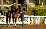 OCT 29: Breeders' Cup Filly & Mare Turf entrant Sistercharlie, trained by Chad C. Brown,  at Santa Anita Park in Arcadia, California on Oct 29, 2019. Evers/Eclipse Sportswire/Breeders' Cup