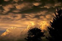 Powerful rainstorm brewing.  mammatus clouds and cumulonimus with tree silhouettes