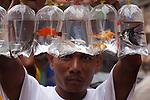 Fish seller showing his wares, Yangon, Myanmar