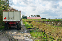 tractor transporting sugar beets to a warehouse