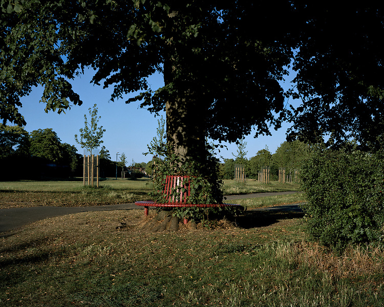 Photograph copyright - John Angerson. 2020 <br /> Cintra Park, Reading, UK.<br /> Lockdown Sanctuary Series. As part of the Jelly Arts 'At Home' residency. Eleven contributing artists have shared their place of Lockdown Sanctuary during the Covid-19 pandemic. Combined with some of the many artefacts that Daisy Angerson made or collected during our daily exercise.