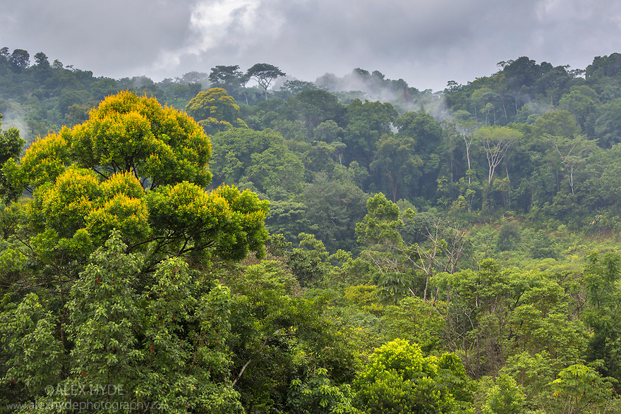 Lowland rainforest, Osa Peninsula, Costa Rica. May.