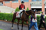 Starless Night(11) with Jockey Emma-Jayne Wilson aboard at  the Natalma Stakes at Woodbine Race Course in Toronto, Canada on September 13, 2014 with Jockey Patrick Husbands aboard.