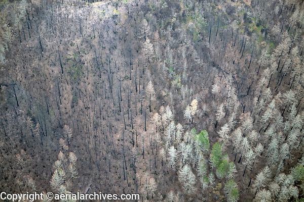 aerial photograph of trees burned in Napa Valley hillside during the Glass Fire, Napa County, California