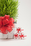 Small cypress tree with red ribbon