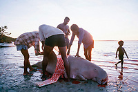 aboriginals of Bardi Tribe, King Sound, Western Australia, butcher captured dugong, Dugong dugon,