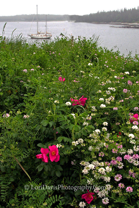 Wildflowers & sailboat  #S13