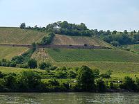 Weinberge bei Mainz, Rheinland-Pfalz, Deutschland, Europa<br /> vineyards near Mainz, Rhineland-Palatinate, Germany, Europe