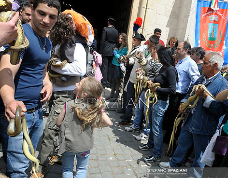 """The St. Domenico's procession in Cocullo, is held up by worshippers during an annual procession dedicated to the saint, in the streets of Cocullo, in the Abruzzo region, on May 1, 2012.....The St. Domenico's procession in Cocullo, central Italy. Every year on the first  of May, snakes are placed onto the statue of St. Domenico and then the statue is carried in a procession through the town. St. Domenico is believed to be the patron saint for people who have been bitten by snakes:..Italy, Cocullo, in the Province of L'A...quila, is at 870 meters a.s.l., along the railway line connecting Sulmona to Rome. The village rises alongside Mount Luparo (1327 meters) """"The valley opening in front of the village is surrounded by bare rocks, while on the other side, to the south, snow-capped mountain crests follow one after the other..."""".San Domenico Abate lived in the 10th and 11th centuries AD. Born in Foligno, in the Umbria region, he started his pilgrimages, preaching and ascetic practices in Central Italy, making miracles recorded by the word-of-mouth tradition. He died on 22 January 1031 and was buried in Sora...Cocullo snake charmers are over with their snake hunting. They proceeded through the During the procession on the first in May, before the snakes are placed all over the statue of St. Dominick, they will be fed with milk kept in containers with crusca. It is the snake that, most of all other elements, expresses an ancestral myth: the unknown aspect and unpredictability of the natural environment with man's innate need to achieve the dominance on his own habitat. ..Snakes and wolves were the emblems of Italic peoples like the Marsians and Irpinians. Some areas in Abruzzo, especially in the Sagittario valley, were under the menace of wolves and snakes, which for the local populations represented the uncertainty and anxiety of their existence that, together with the precariousness and hardships of life, were almost unbearable. Therefore the community adopted such magic"""