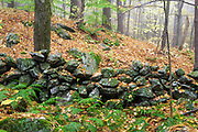 Stone wall covered in leaf drop at Madame Sherri Forest in Chesterfield, New Hampshire during the autumn months.