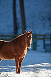 Horse in a pasture in winter