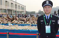 A handout photo from the Hong Kong-based 'AquaMeridian Conservation and Education Foundation' shows China Customs officials stand by 6.2 tonnes of confiscated ivory prior to crushing by Chinese customs under the supervision of China's State Forestry Administration, Huangpu Port, Dongguan, China, 06 January 2014. After the United States, Philippines, Gabon, Kenya and Zambia, China is the latest country to crush its confiscated ivory as a symbolic gesture, sending a message to consumers, traffickers and poachers in Africa and Asia that the ivory trade is wrong and will make Africa's last remaining elephant populations extinct within 15 years. Scientists estimate that 25,000 elephants were illegally killed in 2012.