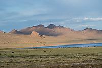 Mongolia, Bayan-Ulgii, Ulgii, Altai Mountai near Tsambagarav Mountain.
