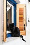 Black cat on a window sill in Plaka, Athens, Greece