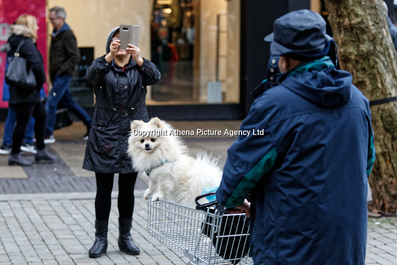Last minute Christmas shoppers pose their dog in a shopping trolley in Oxford Street, Swansea, Wales, UK. Monday 24 December 2018