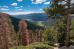 Kawuneeche Valley, Farview Curve, NPS, river valley, forest, pine beetle kill,  August, summer, afternoon, Trail Ridge Road, Rocky Mountain National Park, Colorado, USA